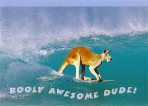 PC105 Surfing Kangaroo, Rooly Awesome Dude